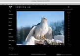 Lookingup website